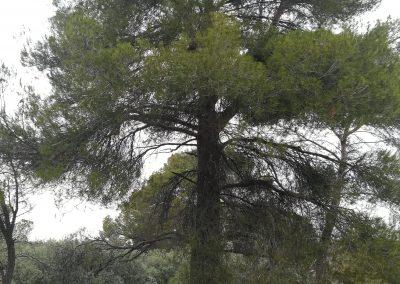 Parque de Aventura el Cañaveral